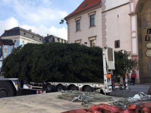 Příprava vánočního stromu na Horním náměstí v roce 2016