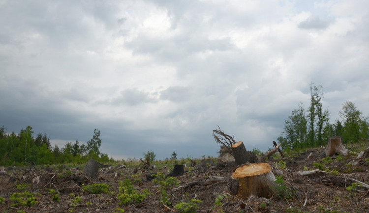 Lesnické zásahy na okraji Rejvízu povolilo CHKO Jeseníky. Důvodem je boj proti kůrovci