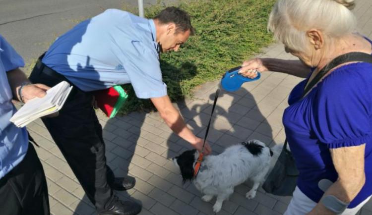 """Strážníci se zaměřili na páníčky psů v rámci kampaně """"Pes za to nemůže"""""""