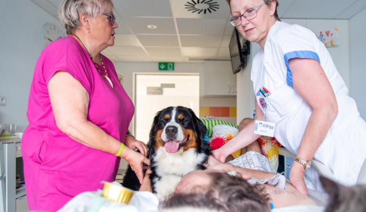 Domácí mazlíčci pomáhají léčit pacienty ve Fakultní nemocnici Olomouc