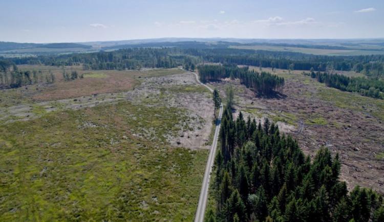 FOTO/VIDEO: Oslabené lesy napadá kůrovec. Dobrovolníci dostanou sazenice a pomohou s výsadbou