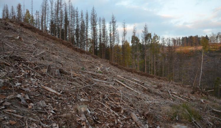 Zákaz kůrovcové těžby na Suchém vrchu požadují ekologové