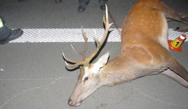 Řidiči skočil před dodávku na dálnici jelen. Střetu už se nepodařilo zabránit