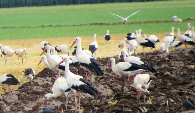 Sypat jed Stutox na pole bez vegetace je nebezpečné, říká olomoucký vědec Emil Tkadlec