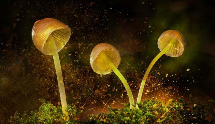 Houby v Pevnosti vás zavedou do světa mykologie