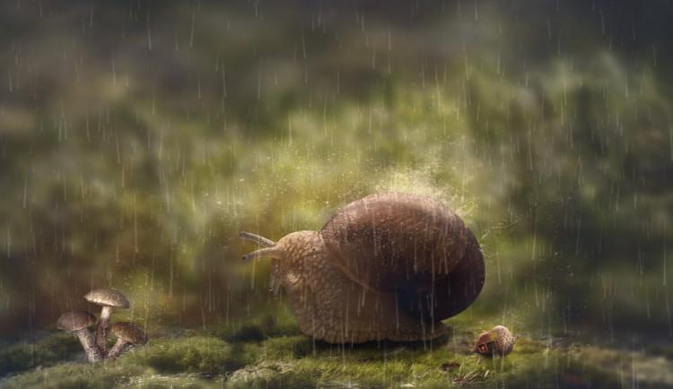 POČASÍ NA ČTVRTEK: Dnes bude oblačno, odpoledne zaprší a povane mírný vítr