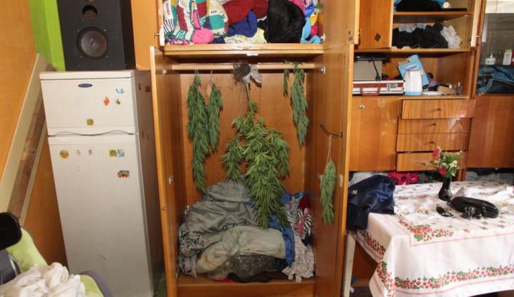Muž pěstoval na zahradě konopí, které pak sušil doma ve skříni. Ve vězení může sedět až pět let