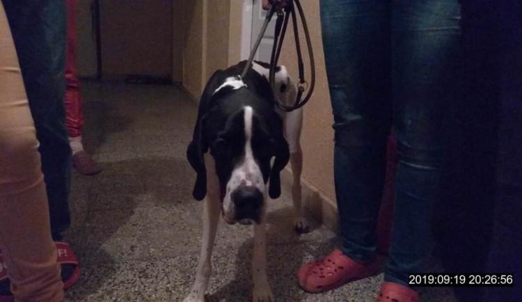 Žena přivázala psa k zábradlí v bytovém domě a odešla. Údajně se o něj nemohla starat