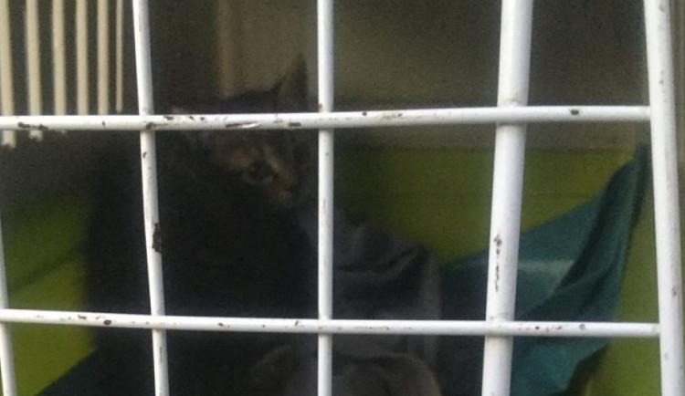 V Lipenské ulici ležel sražený pes. U Rybářských stavů pobíhala koťata kolem mrtvé kočky