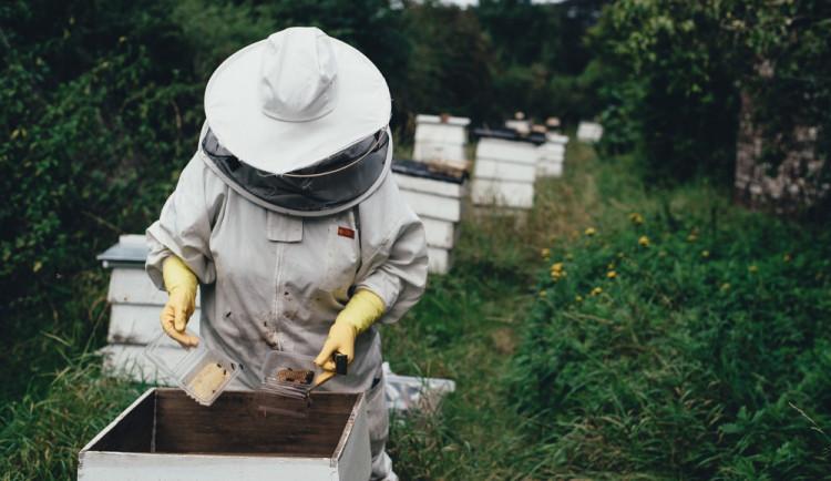 Zloděj ukradl pět včelích úlů ze zahrádkářské kolonie ve Schweitzerově ulici vOlomouci